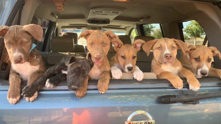anthony-puppies