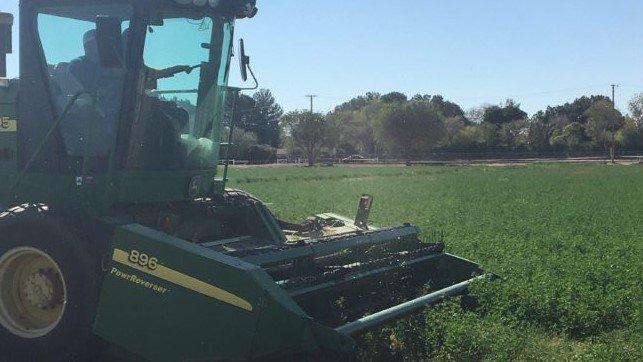 students harvest alfalfa on farm