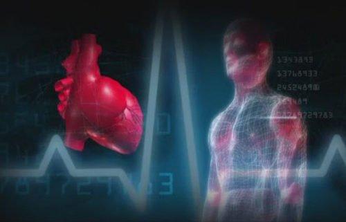 Heart health, cardiovascular fitness