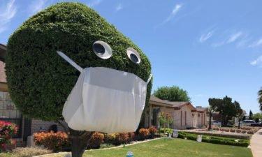 tree-face-mask