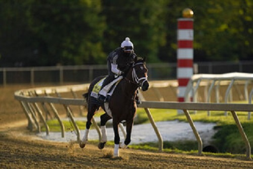 Preakness entrant Rombauer works out during a training session ahead of the Preakness Stakes horse race at Pimlico Race Course.