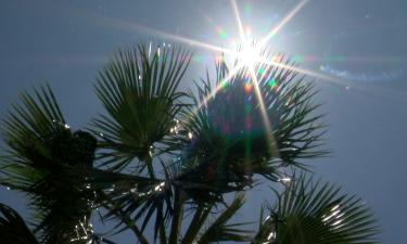 las cruces sun