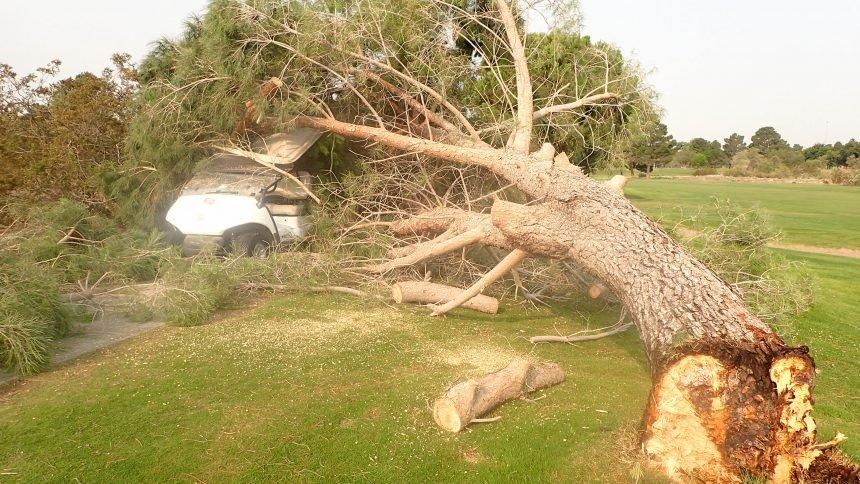 NMSU tree down
