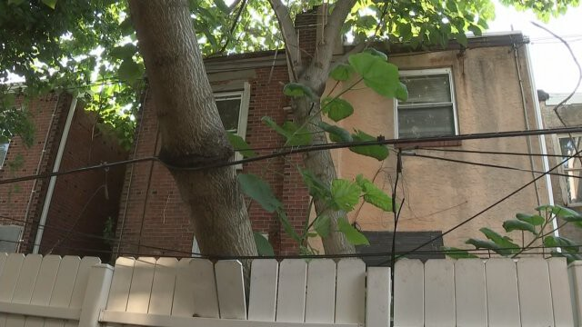 <i>KYW</i><br/>A tree