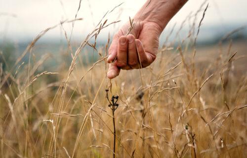 Ben Sweeney walks through one of the carbon-storing grasslands Plantlife has been working to restore.